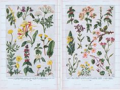 Vintage Book Pages - Spring Flowers. Jackie Basset, Canada.