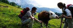 Oostenrijkse wandeldorpen - Iedere dag een nieuw avontuur beleven. Ver weg van alle hectiek en stress, genieten van de natuur. Dat is de magie van wandelen in Oostenrijk. De Oostenrijkse wandeldorpen zijn het ideale uitgangspunt voor een wandelvakantie! Wandelen op een alm in het Salzburgerland
