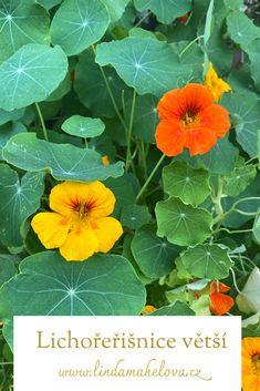 Herbalism, Plant Leaves, Plants, Herbal Medicine, Plant, Planets
