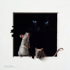Marina Dieul - two mice & black cat
