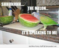 Spectacular - Parakeet Slimes Youtube #repin