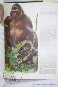 Libros de segunda mano: Libro Naturalia. Enciclopedia Ecológica Ciencias Naturales. Vol III. La Fauna Silvestre - Codex,1965 - Foto 4 - 50515355
