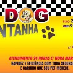 Foto Taxi Dog Rio de Jnairo- RJ (TAXI DOG MONTANHA) - Rio de Janeiro imagem 5
