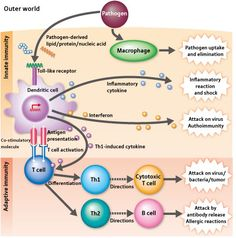 Immune System Function | Neuron & Immune Cells: Together Identify Self & Other | Jon Lieff M.D.