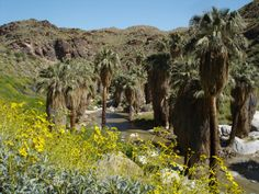 Palm Springs Indian Canyon.  One of my favorite places to visit.