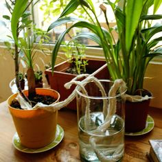 La casa de Alejandra: Como cuidar tus plantas cuando sales de viaje DIY Alejandra de la Parra