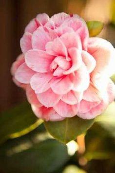 Cuadro Bokeh Rose II