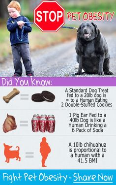 WOW, Pet Obesity is Getting Out of Control. Over 88 Million pets are FAT!  #obese #pets