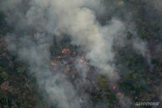 Há mais de dois meses em chamas, a Terra Indígena Arariboia, que abriga o povo Guajajara e um grupo de índios isolados Awá-Guajá, é palco de um drama de dimensões gigantescas. O fogo consumiu quase a metade do território e já atingiu algumas aldeias
