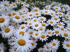 Tumbles Into Wonderland: engelse bloemen tuinen!
