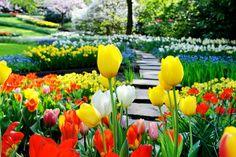Groupon Travel - Festiwal Tulipanów w Amsterdamie