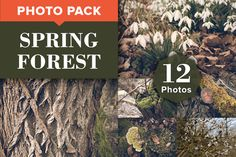 SPRING FOREST — PREMIUM PHOTO PACK (12 high-resolution photos) –– This unique photo pack is aimed at all designers, agencies or photo lovers who are bored of uninspired stock photos. –– Subjects: Forest / Dark / Tree / Woods / Trees / Moss / Bark / Fern / Flowers / Blooming / Spring / Season / Warm / Light / Vintage / Leaf / Leaves / Branches / Branch / Old / Grass / Foliage / Creek / Puddle / Mushroom / Water