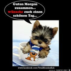 Guten Morgen zusammen Animals And Pets, Good Morning, Pony, Teddy Bear, Humor, Cool Stuff, Bro, Kindergarten, Night