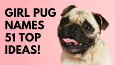 🐾 Girl Pug Names - 51 BEST ✨ CUTE ✨ TOP Ideas | Names Cute Girl Puppy Names, Cute Girl Dog Names, Best Dog Names, Cute Names, Unique Female Dog Names, Best Apartment Dogs, Best Dogs For Families, Best Dog Breeds, Pet Tips