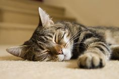 Finally, a cat who looks like my Cutingo!