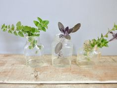 Bottles vintage set of 3 collectors clear glass by NanaBettysHouse