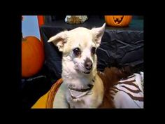Halloween night safety precautions for pets