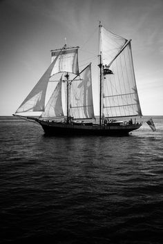 """Tall Ships Races"" by savagecat #flickr #tallship #sea"