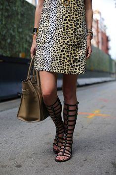 Cheetah & Gladiators