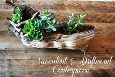Succulent + Driftwood Centerpiece - Emily A. Clark