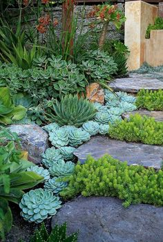 45 Amazing Front Yard Pathway Landscaping Ideas - Page 32 of 46 Low Water Landscaping, Succulent Landscaping, Landscaping With Rocks, Front Yard Landscaping, Succulents Garden, Succulent Plants, Succulent Rock Garden, Desert Landscaping Backyard, Courtyard Landscaping