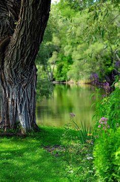 #Brambleberry Pond ... #pond