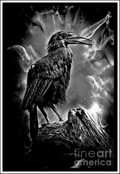 One Dark Scary Night - photograph by Clare Bevan fineartamerica.com #hornbill #spooky #brooding #gothic #wallart