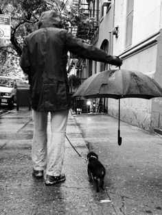 awwww-cute: Best umbrella ettiquette, spotted on the streets of NYC - Funny Animals Foto Picture, Best Umbrella, Rain Umbrella, Foto Top, Dachshund Love, Daschund, Mans Best Friend, Rainy Days, Belle Photo