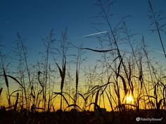 Camminando nell'argine del fiume Brenta ci sono particolari davvero belli specie quando il sole collabora.