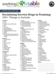 Therapy Dog Training, Service Dog Training, Puppy Training Tips, Therapy Dogs, Emotional Support Dog Training, Emotional Support Animal, Puppy Care, Dog Care, Mastador Puppies