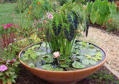 petit bassin aquatique à faire soi-même dans un récipient conique, rempli de végétaux aquatiques et entouré de plantes à fleurs