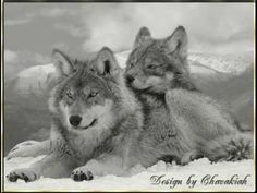 Dances with Wolves - Love Theme - Soundtrack by John Barry