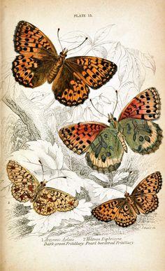 1835 Sir William Jardine (Scottish physician & naturalist; 1800-1874) ~ Naturalist's Library: Plate 15