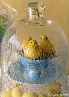 .chicks in a cup under glass