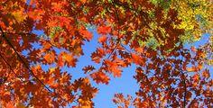 El otoño llega también a tus platos de salmón ahumado #blogROYAL