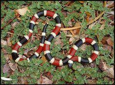 serpiente coral - Buscar con Google