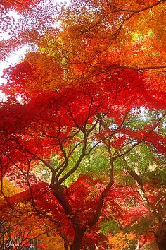 ~ Autumn Color Concerto ~ by Yumi