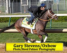 Oxbow and Gary Stevens - 2013 Belmont Stakes Winners