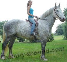 Percheron, http://beauty-around.com/