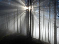 Sun Cross Forest - Мой тихий сон, мой сон ежеминутный — Невидимый, заворожённый лес, Где носится какой-то шорох смутный, Как дивный шелест шёлковых завес. Осип Мандельштам