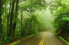 Foggy Spring, Shepherd Forest, Signal Mountain, Tennessee.