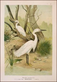 Csontváry Kosztka Tivadar Grey Heron, Long Island City, Post Impressionism, View Image, Painting Frames, Pets, Paintings, Animals, Animales