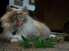Weird Stuff We Found Online: Nicolas Cage Cats