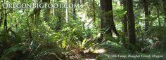 Bigfoot sighting:LapeerCounty,MInearGerman RdOregon Township