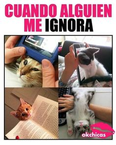 Funny Tutorial and Ideas Memes Humor, Cat Memes, Funny Cats, Funny Animals, Cute Animals, Funny Images, Funny Pictures, Funny Spanish Memes, Caricatures