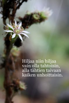RunoTalo: Voimakortit viikolle 38: Rauhaa ja hiljaisuutta Mindfulness Meditation, Wise Words, Thoughts, Sayings, Quotes, Flowers, Dreams, Quotations, Qoutes