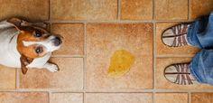 Calma, isso aqui não é um post do Ministério da Saúde com aconselhamento médico para diagnosticar seus potenciais problemas de saúde. É mais um post-matador-de-curiosidade sobre um assunto que muita gente pensa a respeito várias vezes ao dia (talvez os homens mais que as mulheres), quando estão no banheiro tirando água do joelho. Um dos indicativos mais óbvios ao se observar a cor da urina é saber o quanto seu corpo está hidratado ou não. Em alguns casos, colorações diferentes podem…