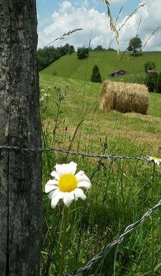rolling hills of beauty...