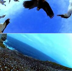 Bird steals egg camera and films penguin colony