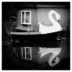 Ride a White Swan by glynneh, via Flickr